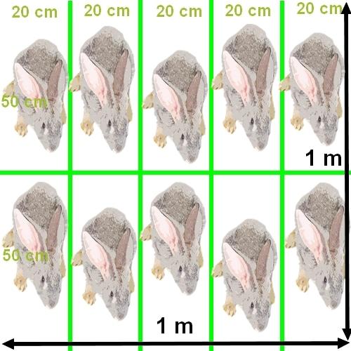 densité lapins au m2 pour l'engraissement